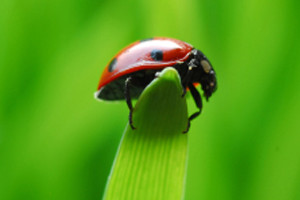 nature shot of ladybug